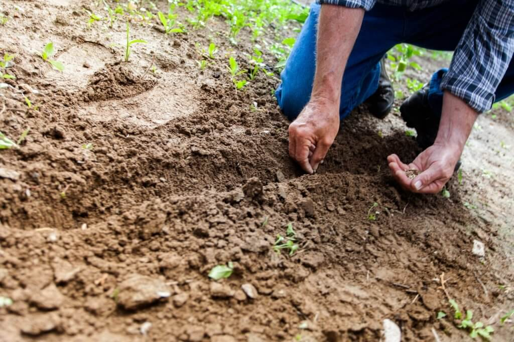 hortas-urbanas-agricultor